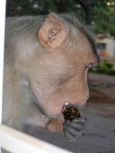 Индия 2005 (65)